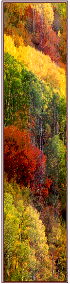 photo showing many different colors of fall foliage