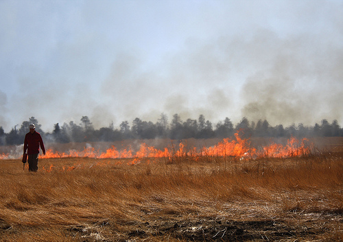 A firefighter uses a drip torch during a prescribed burn on Coconino National Forest.