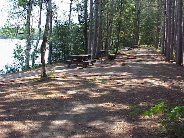 Picnic tables underneath tall red pines next to Lake Leander.