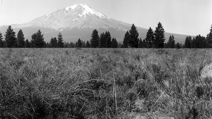 The view looks across a shrub covered field, past a line of trees to Mt. Shasta in the background