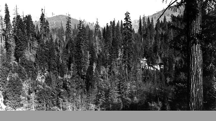 Shows the Sacramento Canyon near Dunsmuir in 1940. The view is trees of various sizes
