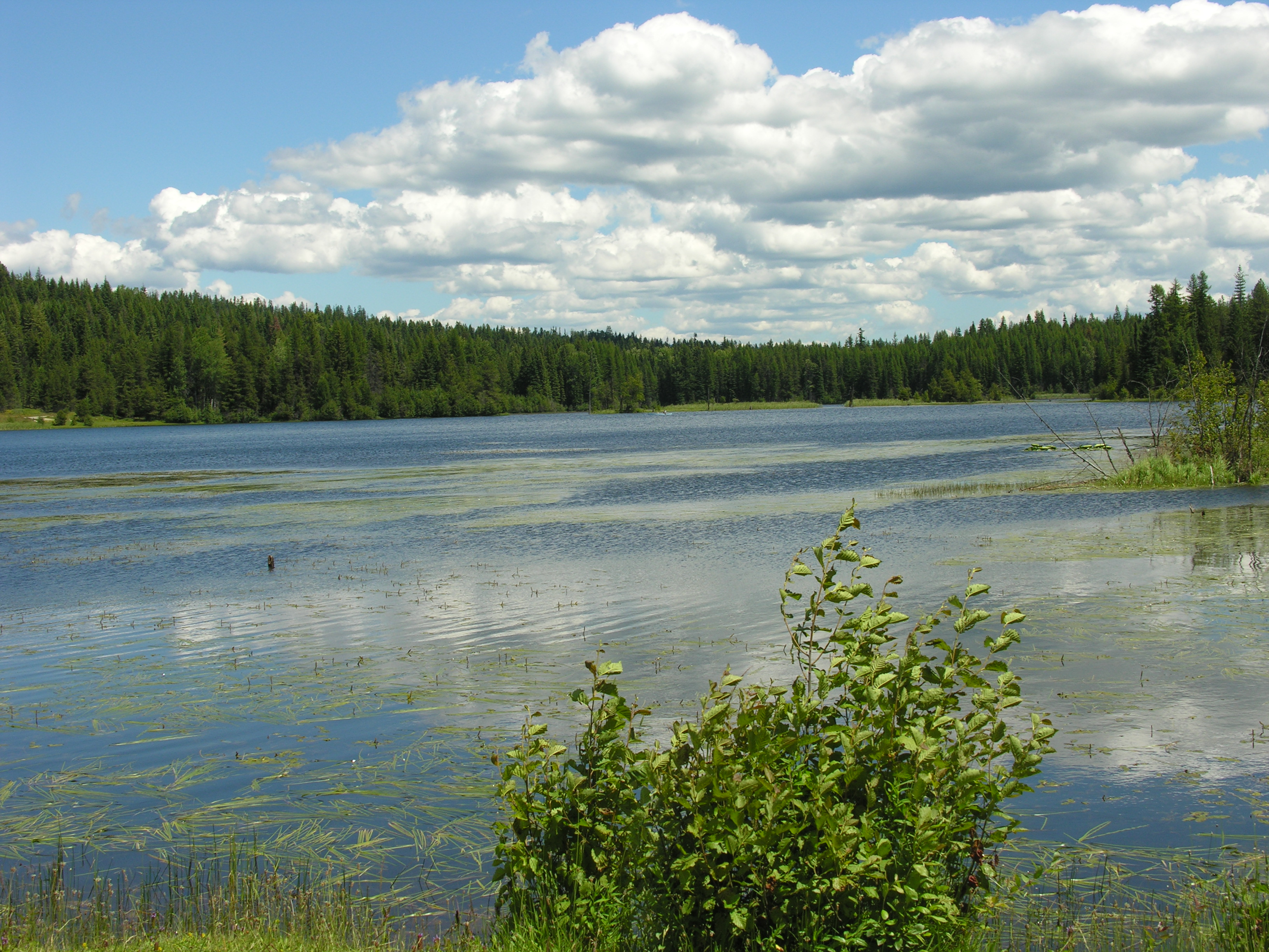 Photo: Lake with blue sky and clouds in background