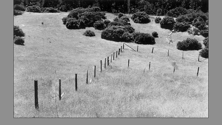 1940. A fence to exclude cattle, built in 1932, is in a field next to trees in the background