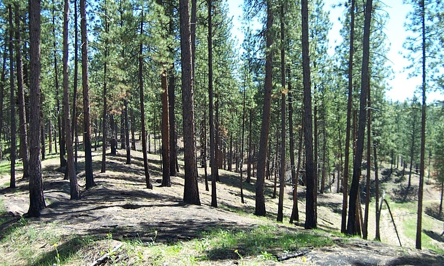 Sample photo of a treated area near Idaho City