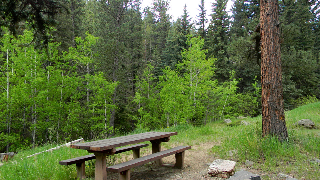 One of the the two picnic sites at Bennett Creek, in an open coniferous forest.