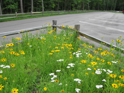 Pollinator Garden located at the M20 Motorsport Trailhead