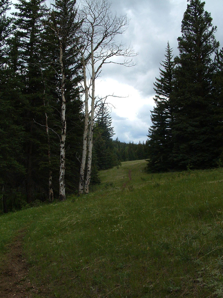 One of several meadows on the Fish Creek trail.