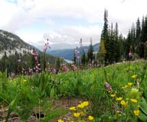 Photo of Moores Lake in the background with wildflowers in foreground.