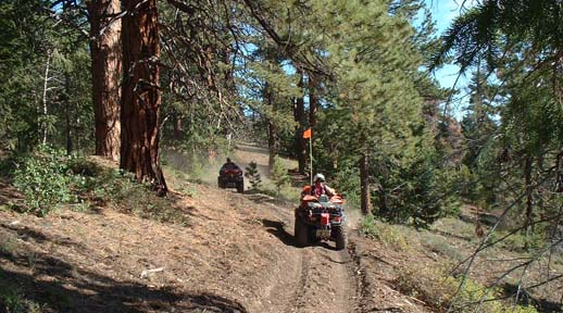 Atv riders in the forest