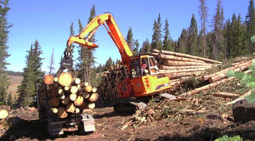 Loading logs on a log truck
