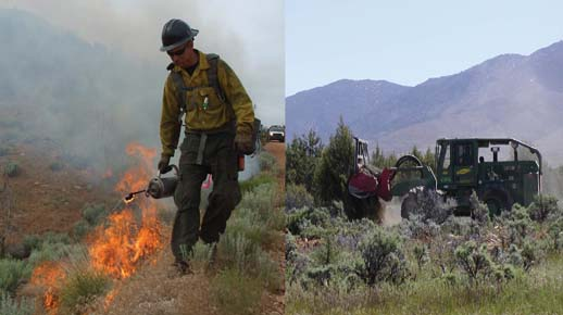 Prescribed fire and mechanical treatment