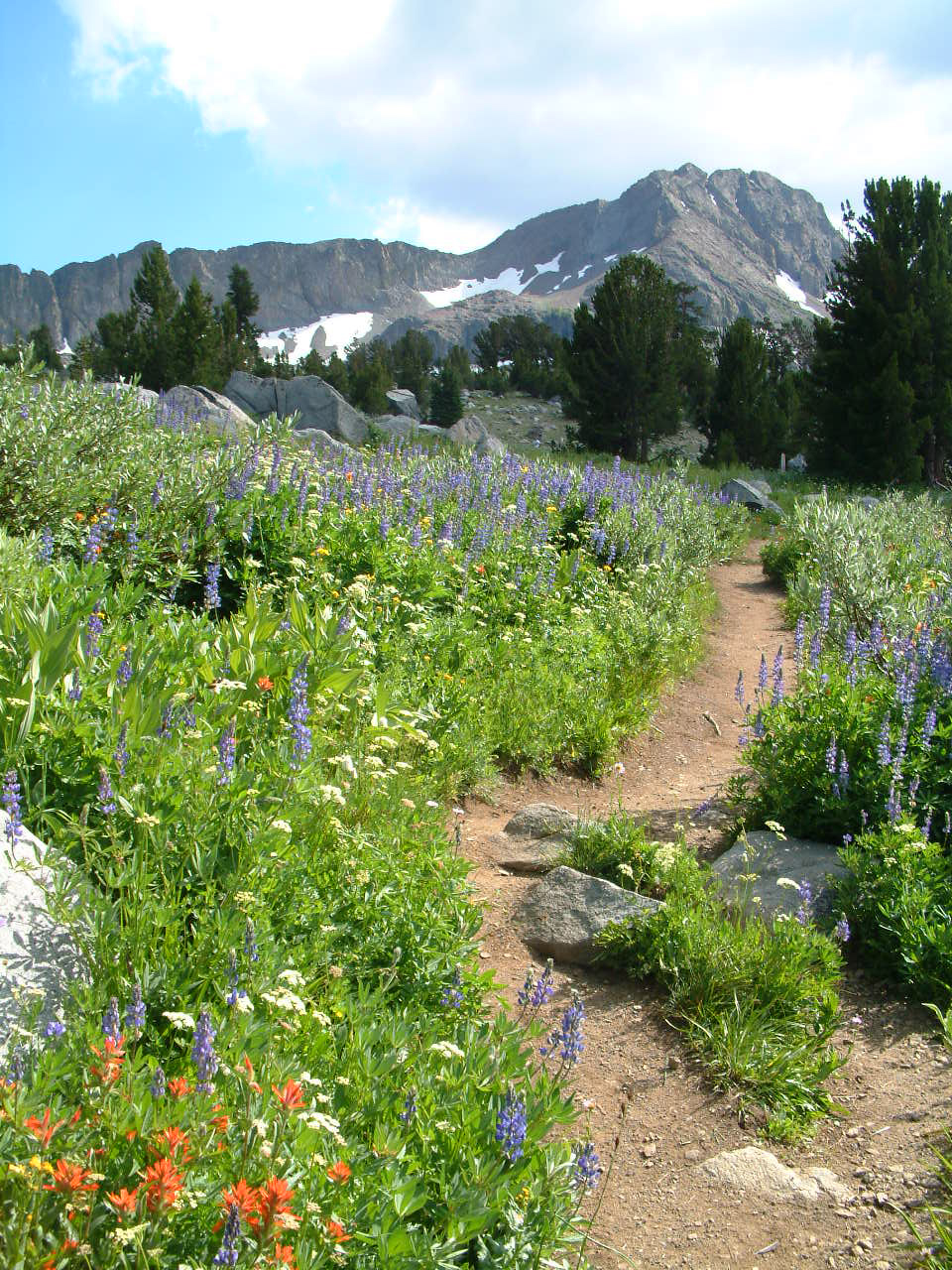 Photo of trail winding through flowers.