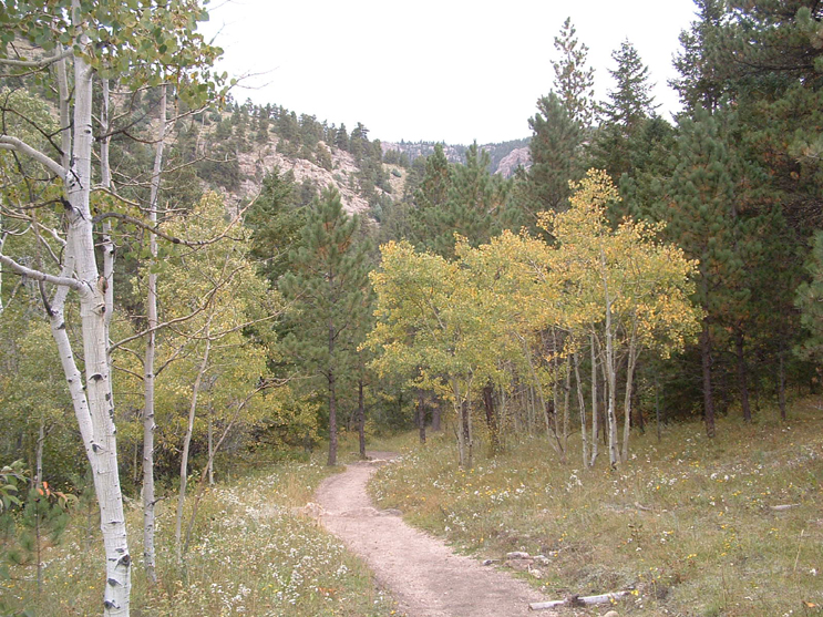 The trail at Lion Gulch. Trail is surrounded by aspen and pine trees.