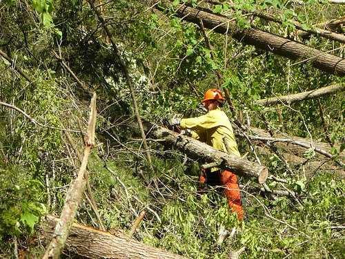 Photo of Forest Service employee works to clear debris from the Boggs Creek road.