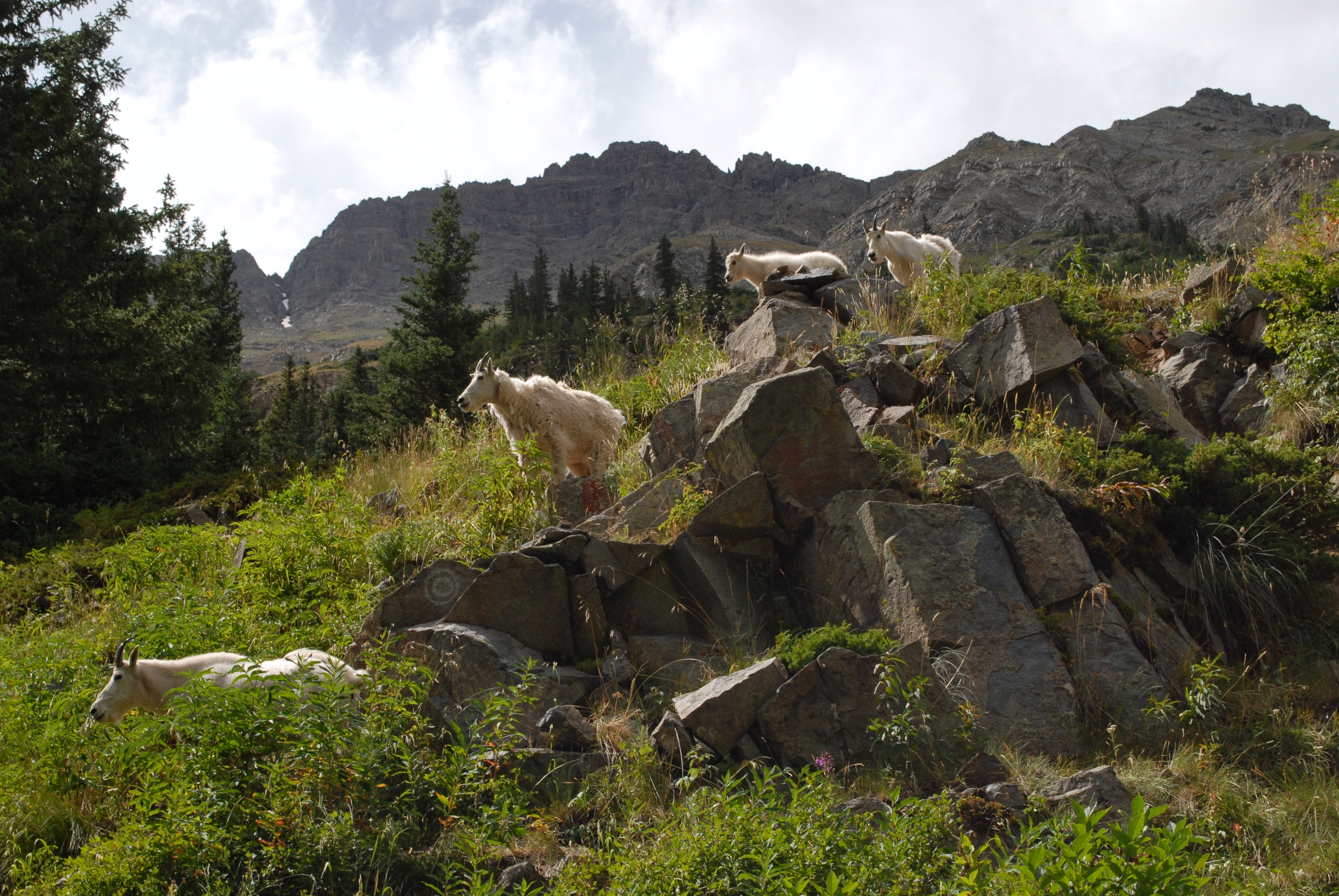 Views of wildlife on the Four Pass Loop trail