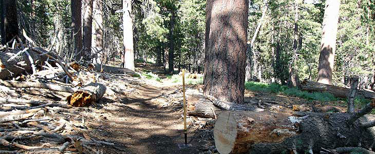 San Jacinto Wilderness trail after