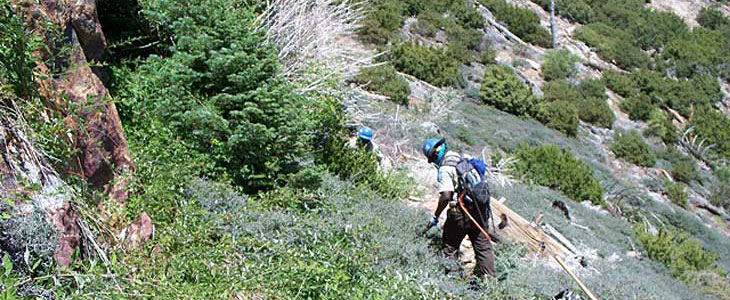 San Jacinto Wilderness trail maintenance Before