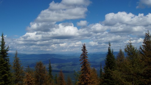 Photo: Trees and Clouds with Valley below