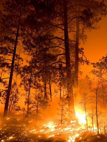 The Wallow Fire burned more than 500,000 acres during the 2011 Arizona wildfire season.