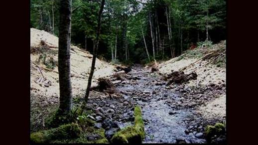 After-Gold Creek Culvert Removal, Dungeness Watershed