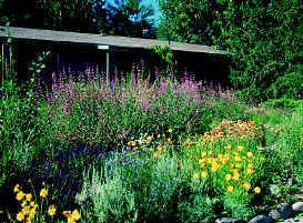 Idaho Native Plant Society