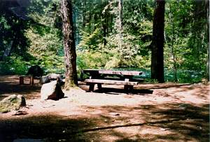 Picnic table in campsite at Olallie Campground with large conifers overhead