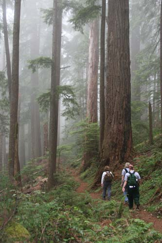Photo of people walking along Horse Creek Trail with trees in the mist.