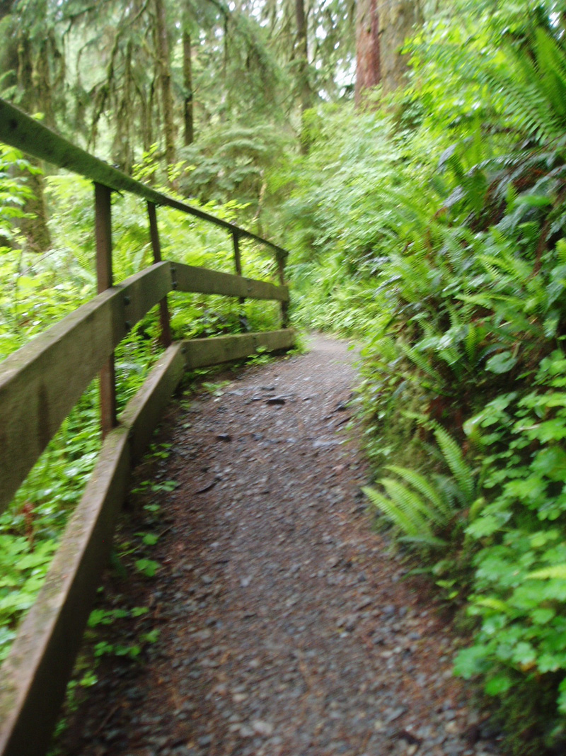 Slight incline on Rain Forest Nature Trail along Willaby Creek
