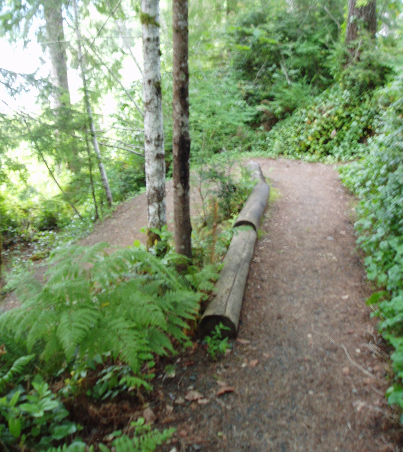 Lakeshore Trail from Lodge to Willaby Campground and the Quinault Rain Forest Nature Trail #855, #2.