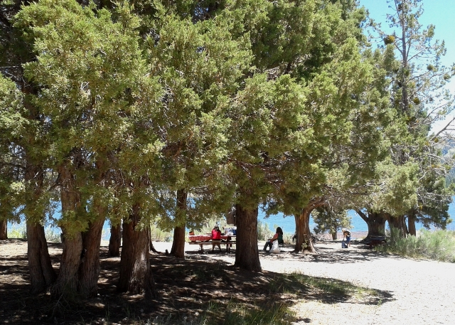 A family picnics under the trees at Juniper Point Picnic Area on the north side of Big Bear Lake.