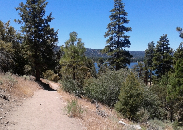 This path winds its way through the pine trees near the north shore of Big Bear Lake.