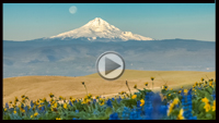 Take a virtual tour of the national forests in the Pacific Northwest Region.