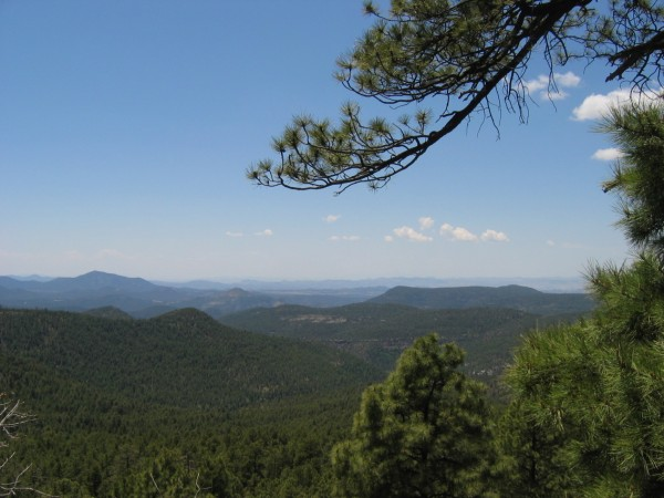 A view of the Gila Wilderness from Signal Peak