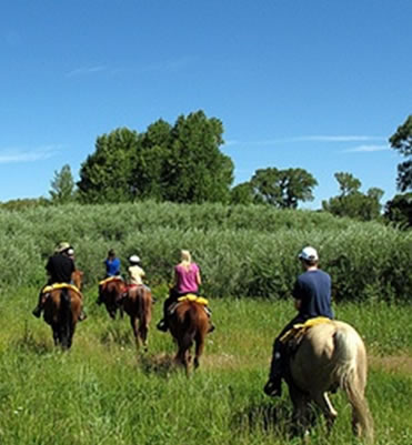 Horse riders along a trail in the Grand Mesa National Forest, located in west-central Colorado