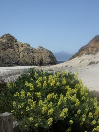[Pfeiffer Beach]