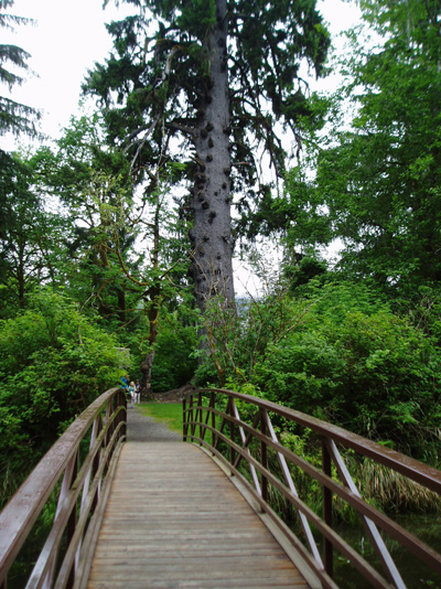 Bridge to view Largest Spruce Tree.
