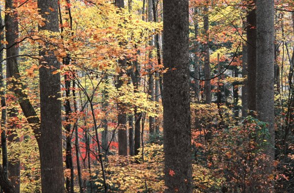 Fall in the Nantahala National Forest