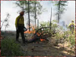 photo of forest service workers lighting a prescribed burn in woods
