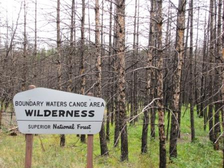 One year after the Pagami Creek Wildfire