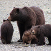 Picture of 3 Bears