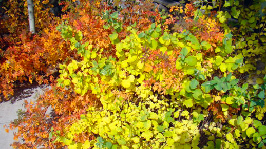 Close-up of a mixture of red, yellow, and green leaves.