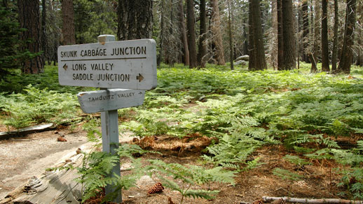 Skunk Cabbage Junction in the San Jacinto Wilderness.