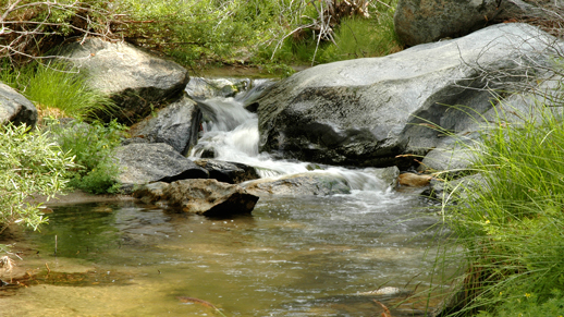 You can almost hear the creek water flowing in the San Jacinto Wilderness.