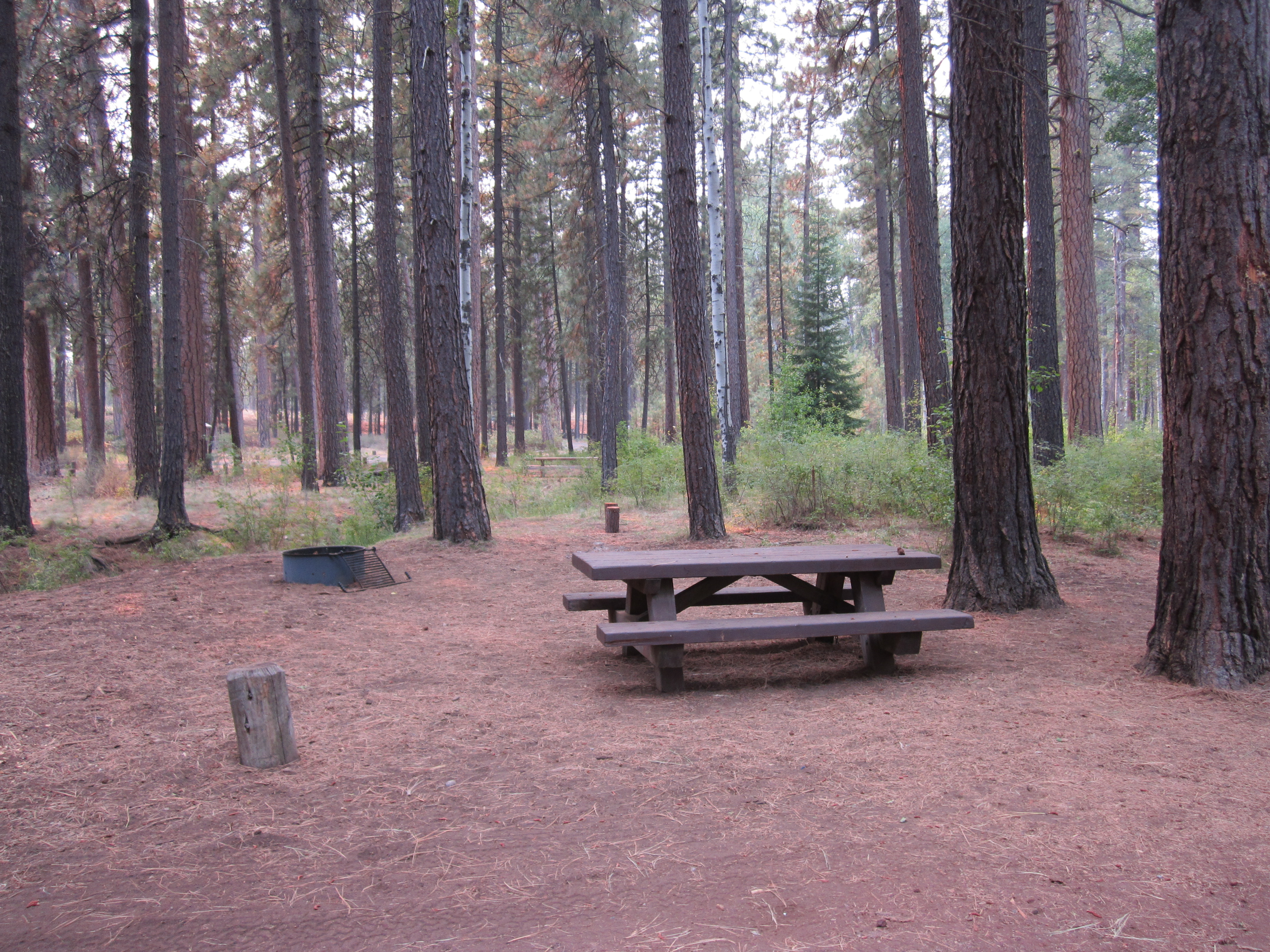 Cold Springs Campsite