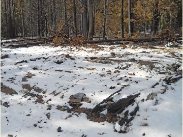 Remains of Haney Meadow Historic Cabin after fire