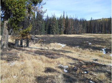 Haney Meadow after fire
