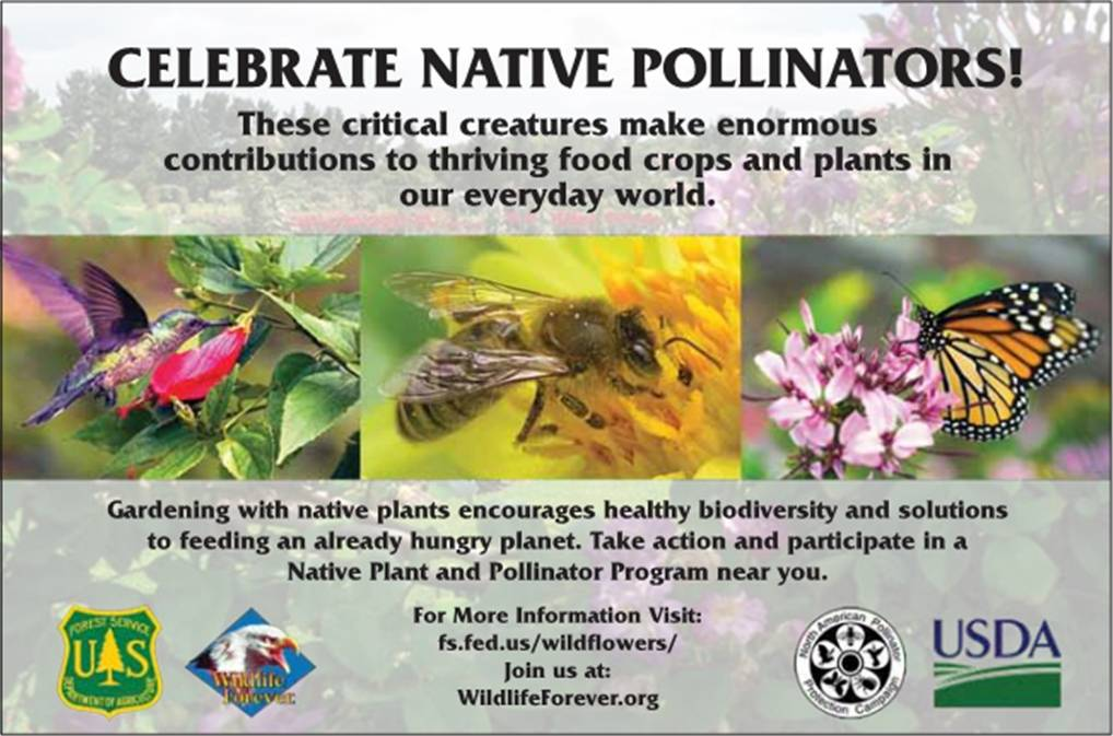 Celebrate Native Pollinators