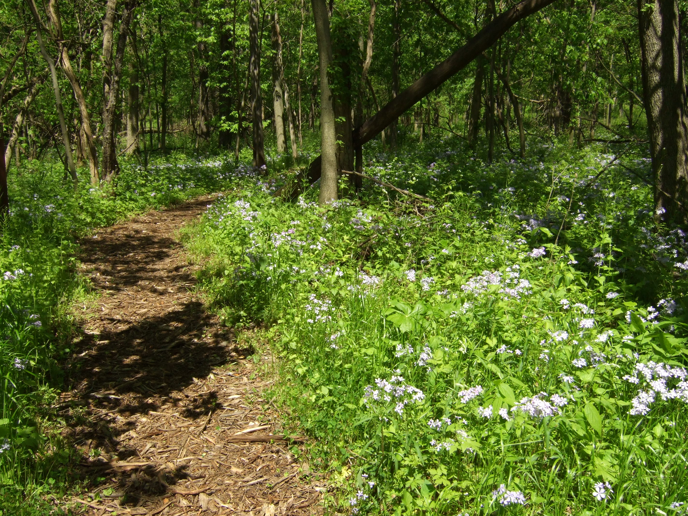 Prairie Creek Woods