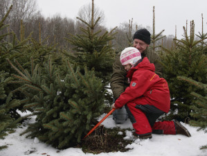 child cutting a Christmas tree