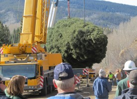 phot of tree loading onto truck